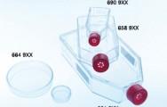 פלסק 75 לתרביות תאים עם פקק פילטר
